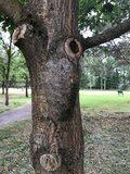 Behandeld nest